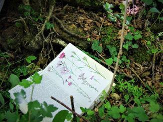 Cuaderno en el bosque